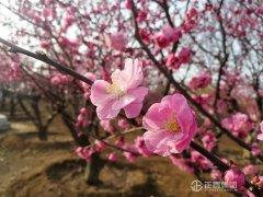 花开春意暖 超碰caoporn汽车主题公园迎赏花踏青游客高峰